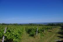 Vignoble de la seigneurie de l'île d'Orléans